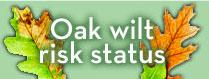 Oak Wilt Logo