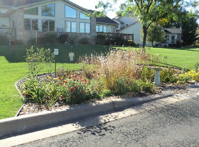 A Rain Garden That Recieves Street Runoff